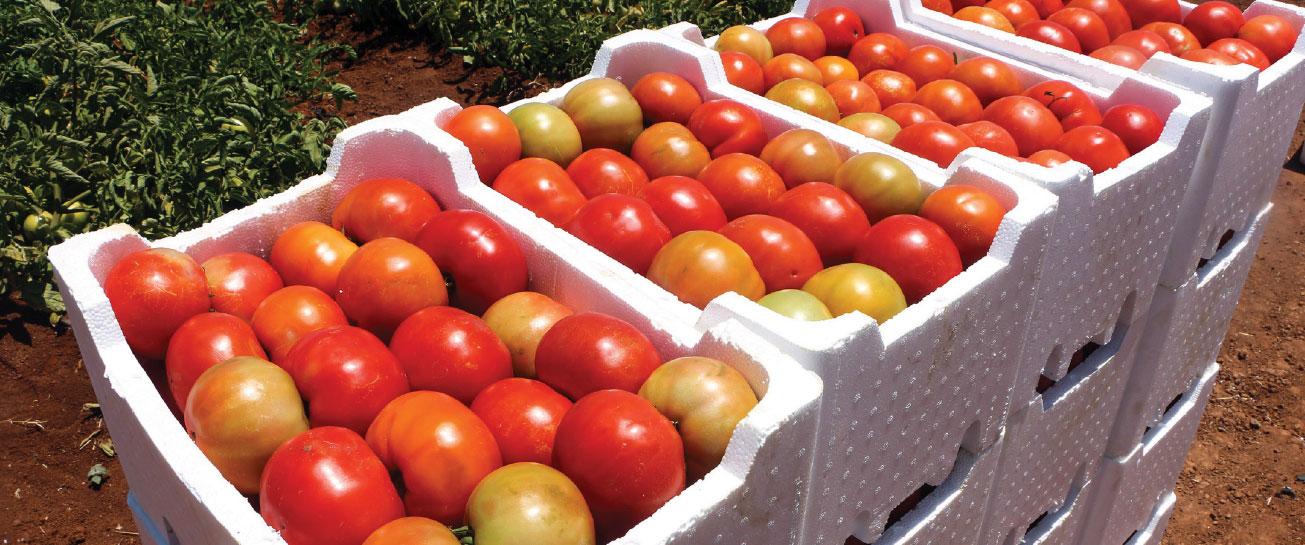 أسعار الخضر ترتفع في السوق والبندورة بألف ليرة والبطاطا بـ1200 ليرة … اتحاد الفلاحين يبرئ التصدير ولجنة تجار الخضار: انخفاض 60-70 بالمئة بزراعة الفواكه والخضر